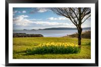 Daffodils, Framed Mounted Print
