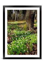 Spring Flowers, Framed Mounted Print