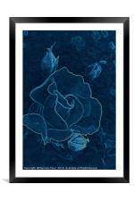 blue rose contour, Framed Mounted Print
