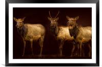 Three Elk, Framed Mounted Print