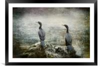 Two Cormorants, Framed Mounted Print