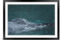 Blowhole, Framed Mounted Print