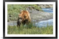 Brown Bear After His Dip, Framed Mounted Print
