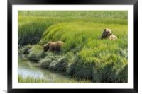 Two Brown Bear Cubs in a Meadow of Variegated Gree, Framed Mounted Print