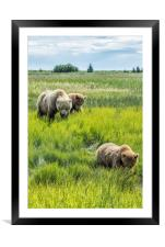 A Mother and Her Two Cubs, No. 3, Framed Mounted Print