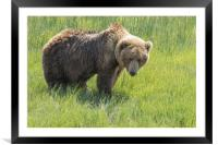 Don't Mess with Mama Bear, Framed Mounted Print