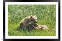 I Got Your Back - Bear Cubs, No. 4, Framed Mounted Print