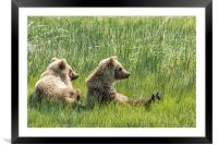 Unbearably Cute - Bear Cubs, No. 5, Framed Mounted Print