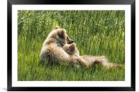 Best Friends Fur Ever - Bear Cubs, No. 8, Framed Mounted Print