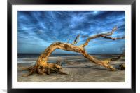 Wind Bent Driftwood, Framed Mounted Print