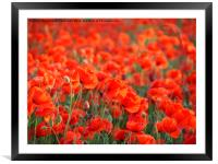 Poppies Galore, Framed Mounted Print