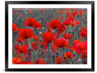 Red Poppies, Framed Mounted Print