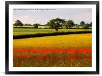 Red Poppies and Green Fields, Framed Mounted Print