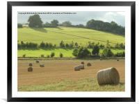 Hay Bales at Nettleden, Framed Mounted Print