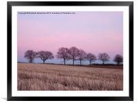 Pastel Treeline in February, Framed Mounted Print