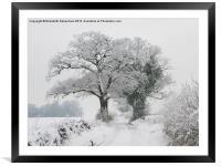 Oak Trees in Winter Snow, Framed Mounted Print