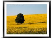 Beech Tree in Yellow Field, Framed Mounted Print