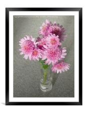 Chrysanthemum Beauty, Framed Mounted Print