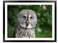 You said WHAT?, Framed Mounted Print