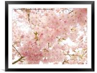 Beautiful pink Spring blossom., Framed Mounted Print