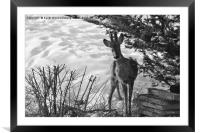 The Naughty Visitor, Framed Mounted Print