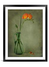 Orange Freesia, Framed Mounted Print