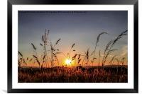 Sunset Grass, Framed Mounted Print