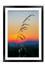 Standing Tall At Sunset, Framed Mounted Print