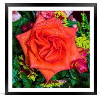 Orange Rose, Framed Mounted Print
