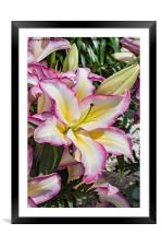 Lily Lovely, Framed Mounted Print
