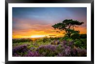 New Forest Sunset at Bratley View, Framed Mounted Print