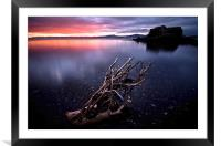 Branching out!, Framed Mounted Print