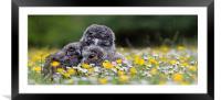 Cute owl chicks in rain, Framed Mounted Print