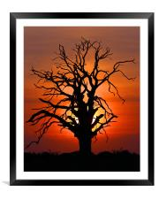 Sunset Tree, Framed Mounted Print
