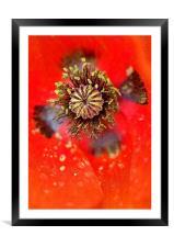 Poppy Head macro, Framed Mounted Print