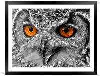 Eyes of a Bird of Prey, Framed Mounted Print