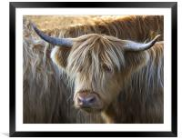 Face to Face With a Horny Cow, Framed Mounted Print