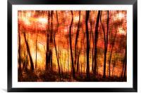 Sunset at botanical garden, Framed Mounted Print