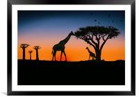 giraffes at sunset, Framed Mounted Print