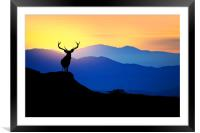 deer at sunset , Framed Mounted Print