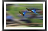 Flying Display, Framed Mounted Print