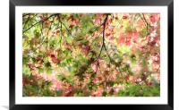 Glorious Autumn , Framed Mounted Print