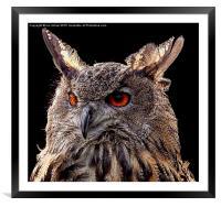 EURASIAN EAGLE OWL , Framed Mounted Print