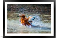 Duck Splash, Framed Mounted Print
