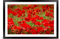 Field of Poppies, Framed Mounted Print