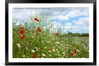 colourful wildflower meadow, Framed Mounted Print