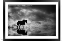 Horse, Framed Mounted Print
