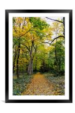 Path of Gold, Framed Mounted Print