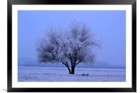 Iced Tree, Framed Mounted Print
