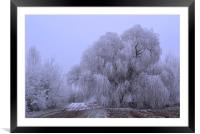 Wintry Weeping Willow, Framed Mounted Print